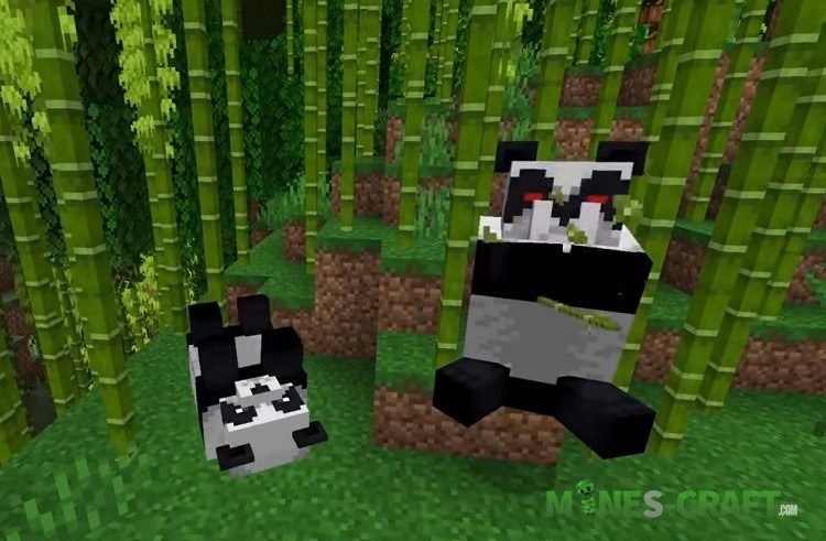 Chinese Pandas and Minecraft 1.14